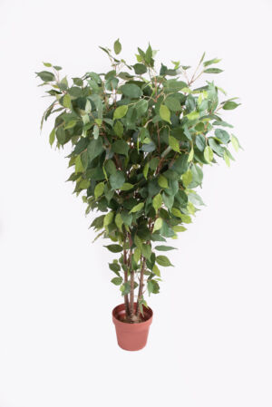 FICUS PLANT 125cm
