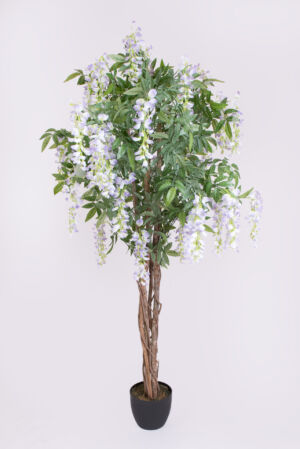 GLICINE TREE